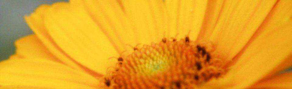 Czy alergia jest wyleczalna?